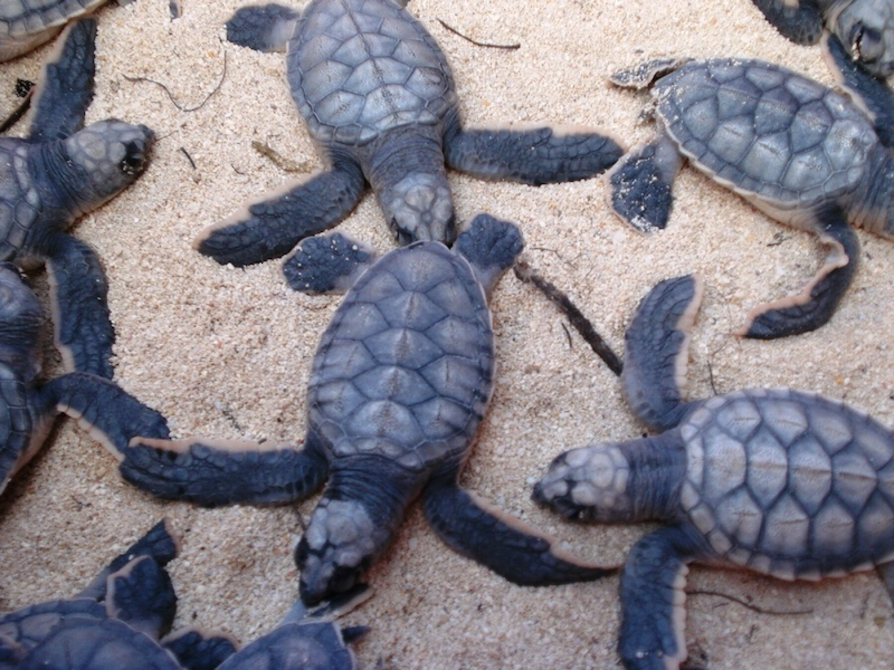 Life and Style Tortugas 2.jpg