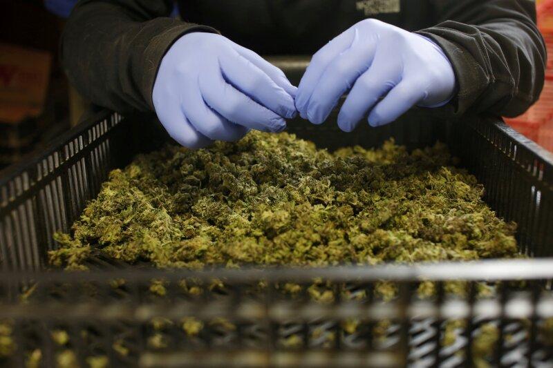 Farmacias Magistrales Aurora Cannabis compra