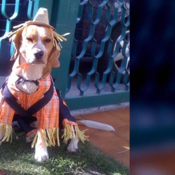 irpt-mascota-halloween1