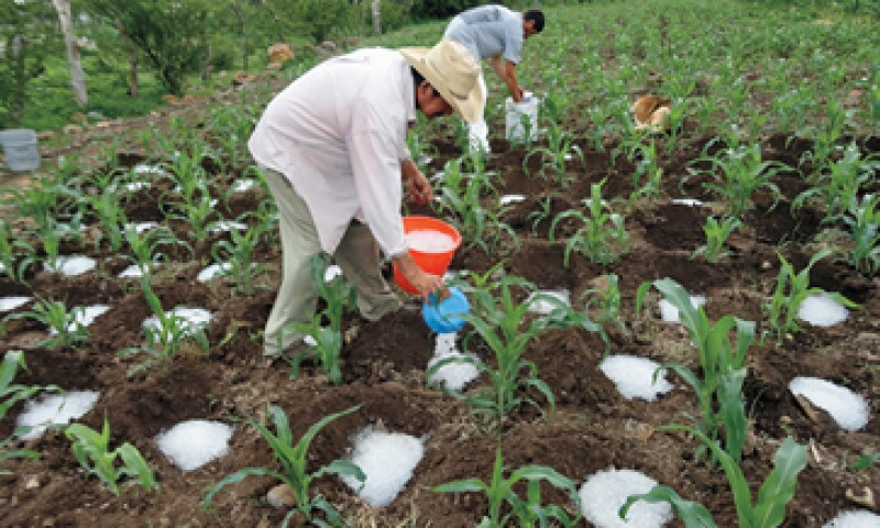 La lluvia sólida logra aumentar cinco veces la productividad de los cultivos de maíz. (Foto: Especial)