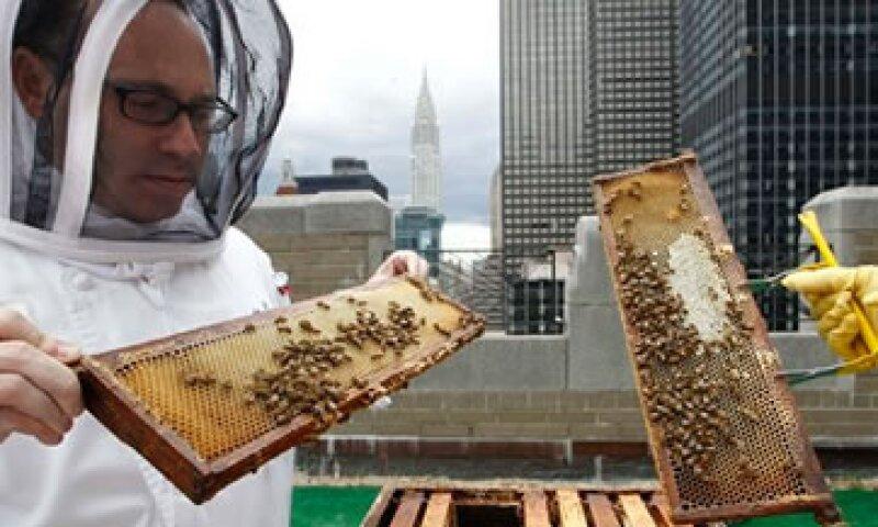 El hotel Waldorf Astoria planea producir su propia miel y ayudar a polinizar plantas en el corazón de Manhattan. (Foto: AP)