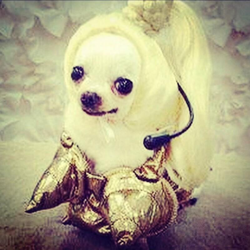 """Material dog"", así luce la perrita que hace homenaje a Madonna."
