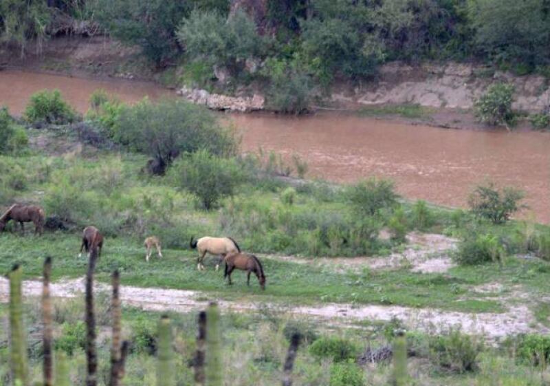 R�o de Sonora contaminado con derrame de minera
