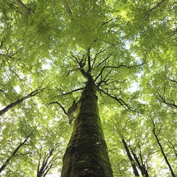 bosque, arboles, plantas, ambiente