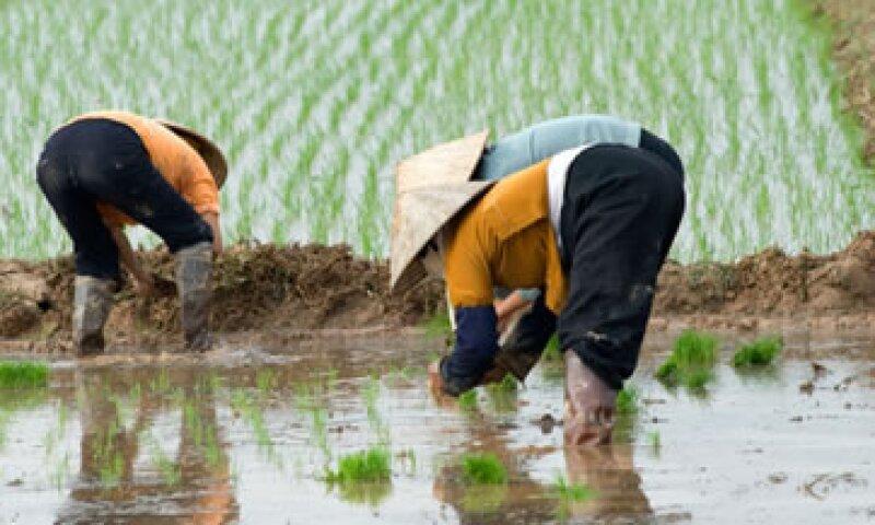 27 millones de hectáreas presentan contaminación del suelo. (Foto: Getty Images)