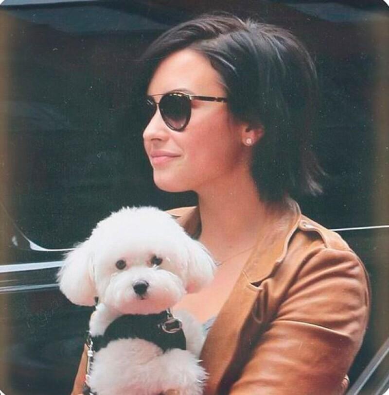 La cantante encontró a su mascota muerta en el patio de atrás de su casa de Los Ángeles.