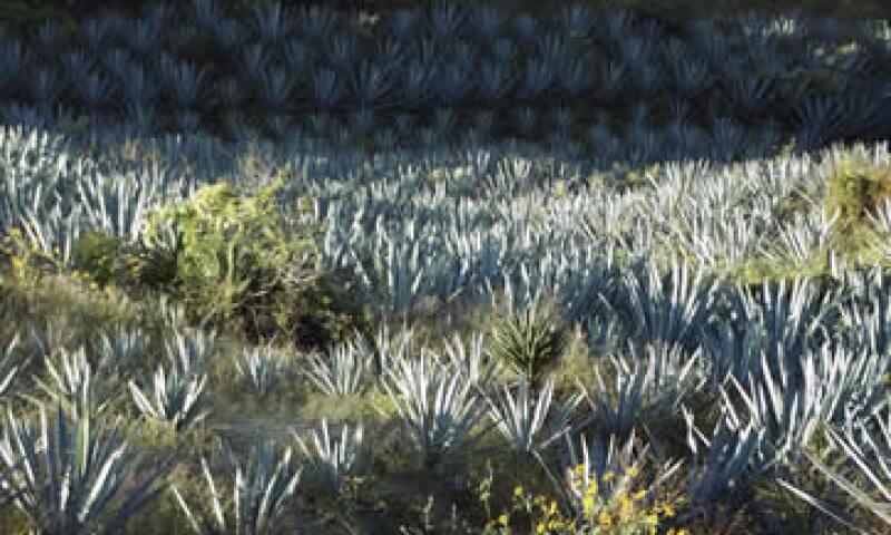 En el país se producen 500,000 litros de mezcal con calidad de exportación. (Foto: Cortesía Comercam)