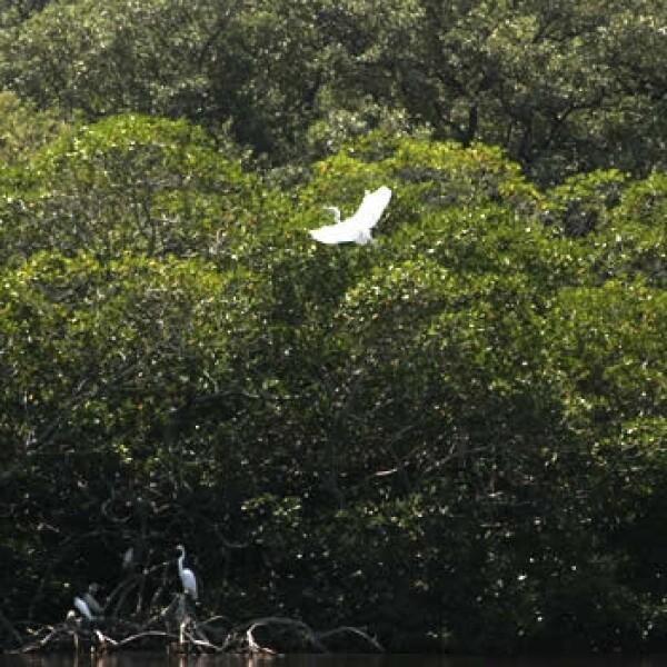 aves y humedales veracruz 8
