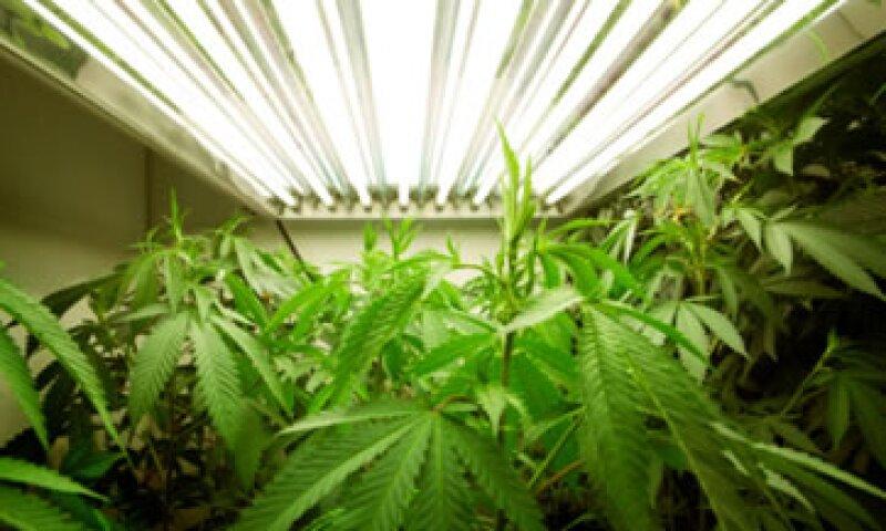 Unas 15 empresas que venden la droga hablarán con posibles candidatos en una feria de empleo en Denver específicamente relacionada con el cannabis.  (Foto: Getty Images)