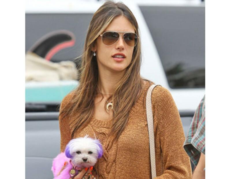 La famosa modelo fue reprendida por la asociación que protege los derechos de los animales, debido a que se le vio con su mascota con el pelo teñido.