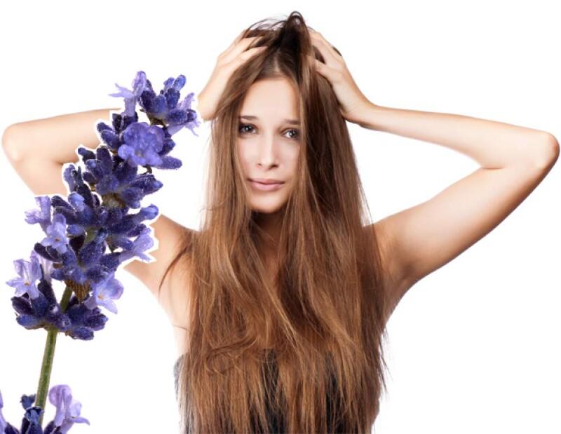 Siendo antibacterial, la lavanda ayuda a eliminar la caspa y la picazón del cuero cabelludo.