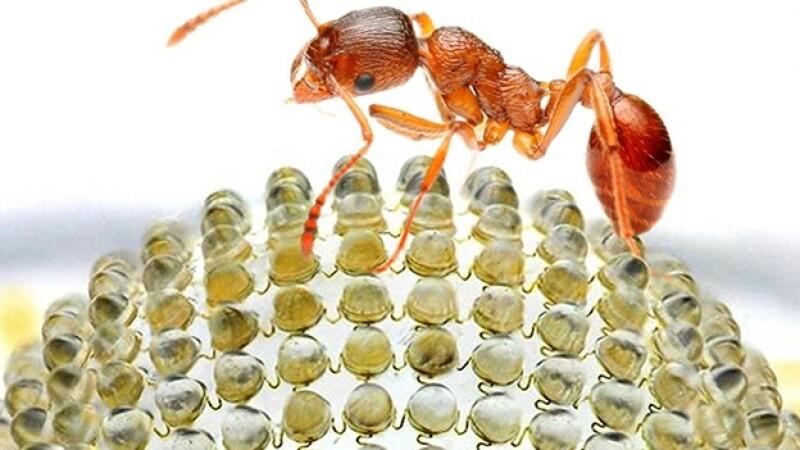 camara replica ojo de insectos