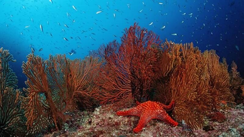 Arrecife de Cabo Pulmo-Getty