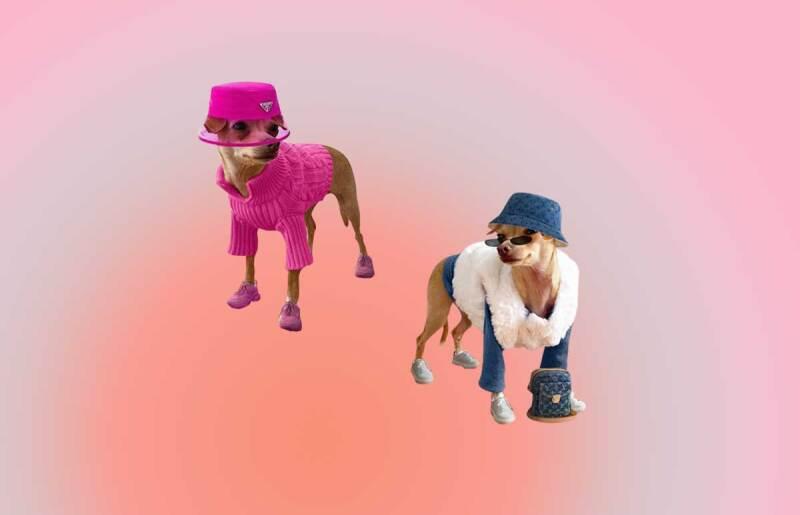 Boobie-Billie-perrito