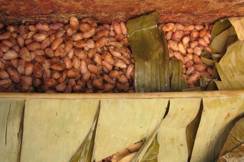 El sabor comienza con la fermentaci�n, que se produce en la finca inmediatamente despu�s de la cosecha