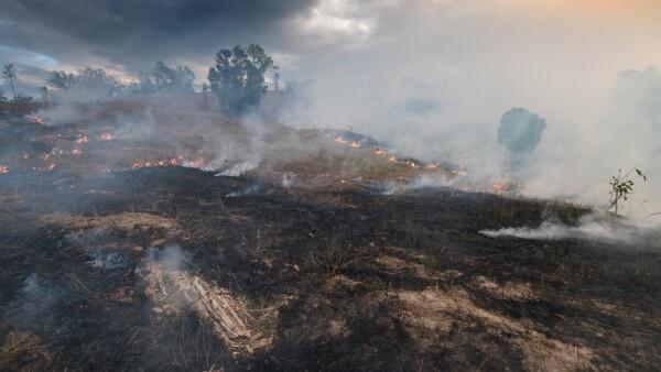 Bosque - incendio