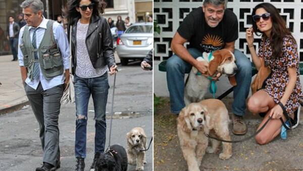 Hay famosos que han declarado que prefieren adoptar sobre comprar una mascota, pues aman la idea de darles una familia a animales que has sufrido abandono.