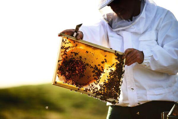 abejas-guerlain-día mundial-miel-skincare-iniciativas-bees-1.jpg