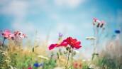 La-gran-batalla-floral
