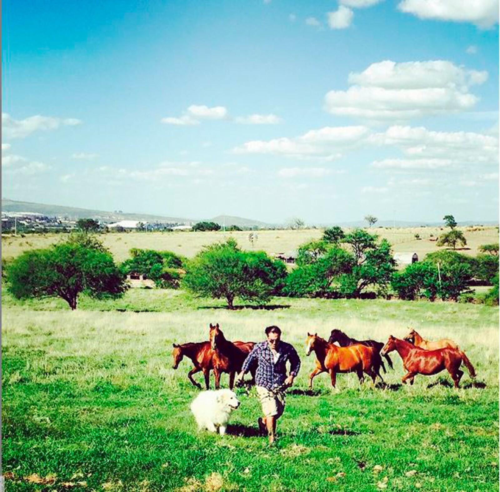 Dos pasiones unidas: los caballos y los perros.