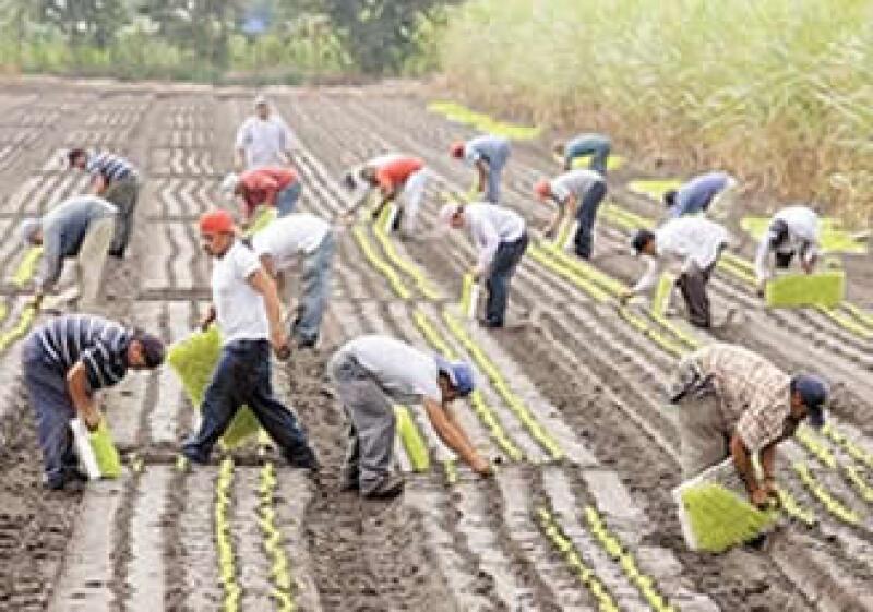 En 2008 la empresa fue acusada de contratar a inmigrantes ilegales para reducir los sueldos.  (Foto: AP)