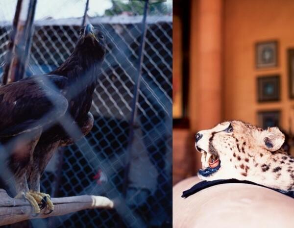 Los animales reciben todos los cuidados para su perfecta conservación.