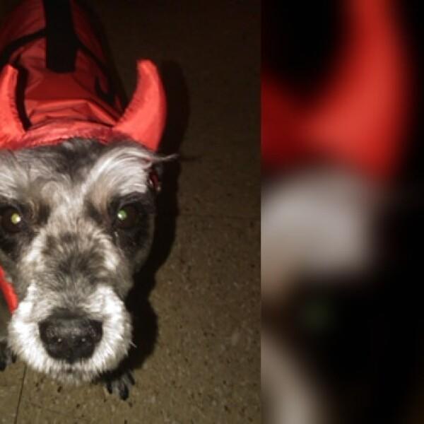irpt-mascota-halloween5