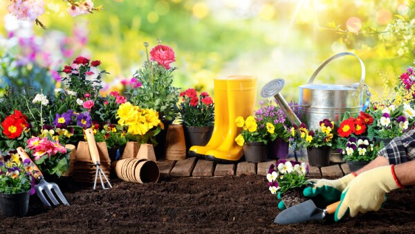 Gardening - Equipment For Gardener And Flowerpots In Sunny Garden