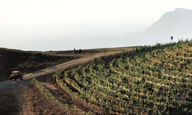 El concepto inmobiliario en la zona vinícola bajacaliforniana oferta viviendas con viñedo, sin necesidad de invertir directamente en la infraestructura de vinificación. (Foto: Paulina Chávez)