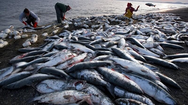 pesca oceanos