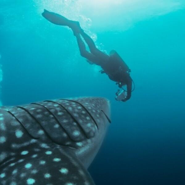 ambiente, conservacion, ballena, mar, oceano, buzo, biodiversidad,