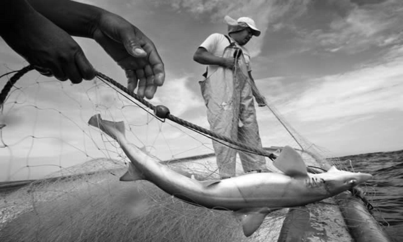 También, se premiaron fotos de distintos temas las cuales, en su mayoría, recibieron menciones de honor.  La pesca fue la inspiración que Alejandro Rivas tomó por medio del objetivo de su cámara. La foto fue efectuada en Punta Lobos, Baja California Sur