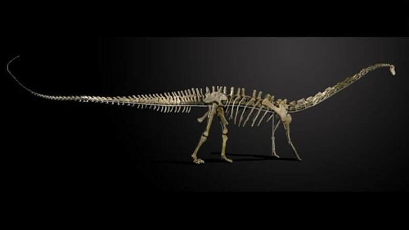 Diplodocus dinosaurio