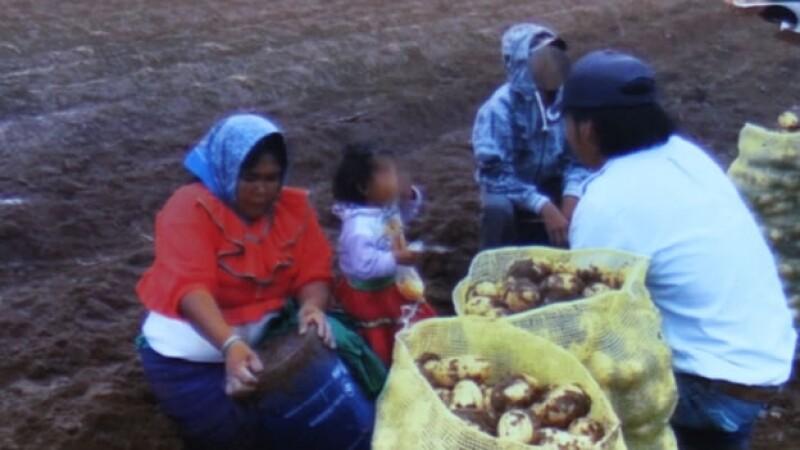 Varios de los tarahumaras que trabajaban en un campo de Baja California Sur bajo condiciones precarias, informaron las autoridades