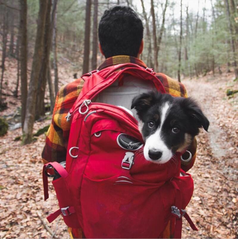 La mirada tierna de este cachorro delata su temor por esta nueva expedición.