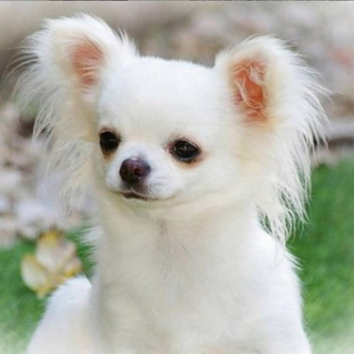 ¿Yaya Kosikova busca un perro para Montserrat Oliver?