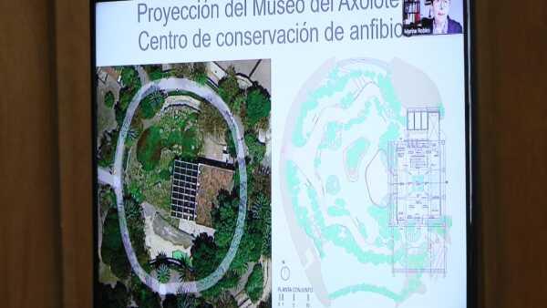 Museo Axolote