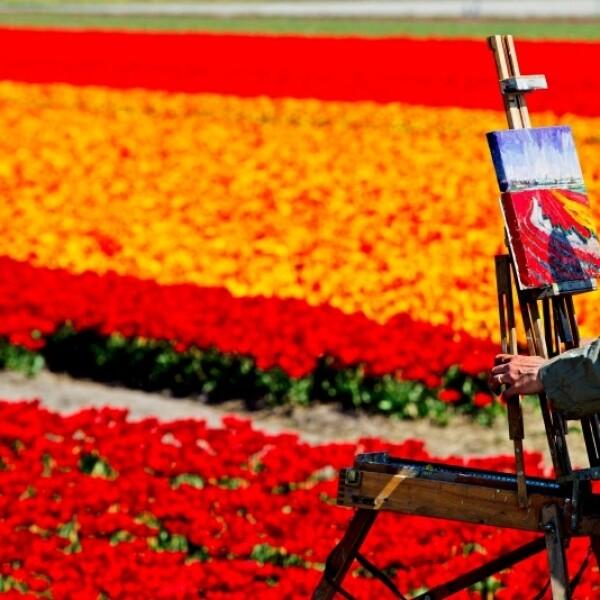 Los campos de tulipanes, Lisse, Holanda