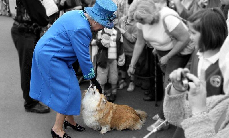 queen-elizabeth-cogis-royals-perros-reales