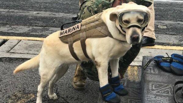 Frida, perro rescatista