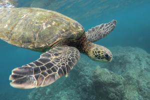 cozumel-tortugas