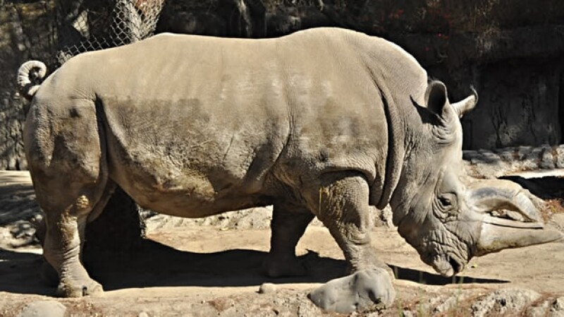 Khartoum rinoceronte Chapultepec
