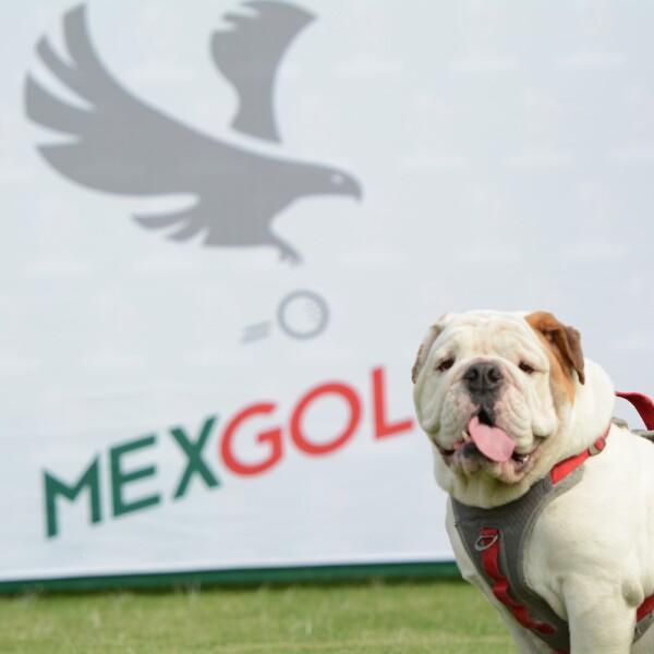 Theo - Mascota MexGolf.jpg