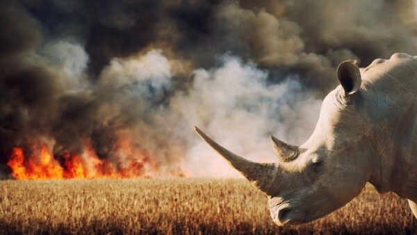 Environmental Damage (Savanna Fire and Rhinoceros in Africa)