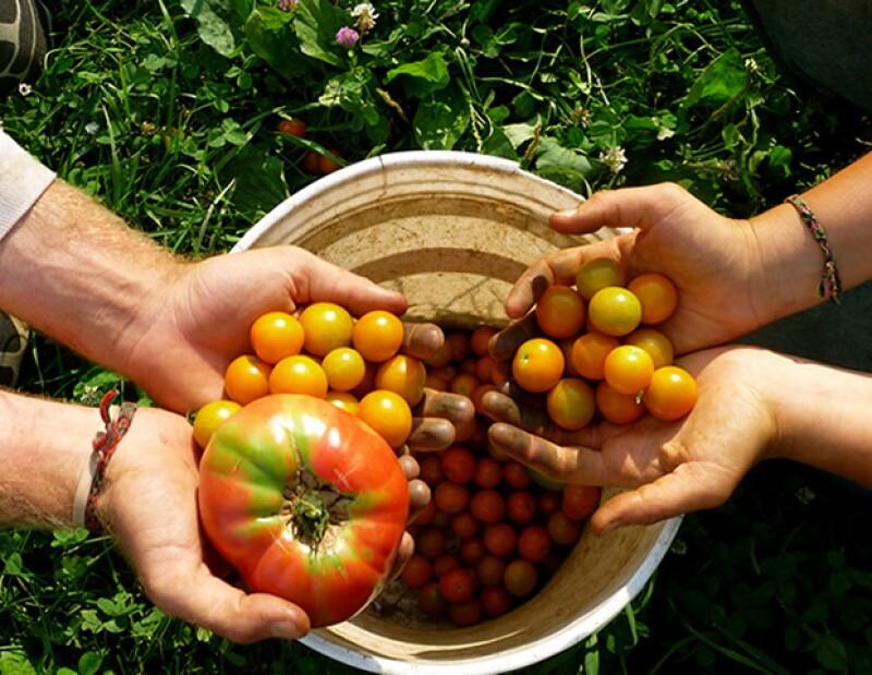 Hay mucho ruido sobre consumir alimentos orgánicos, pero muchos de nosotros no sabemos con exactitud qué es realmente la comida orgánica. Nosotros te explicamos.
