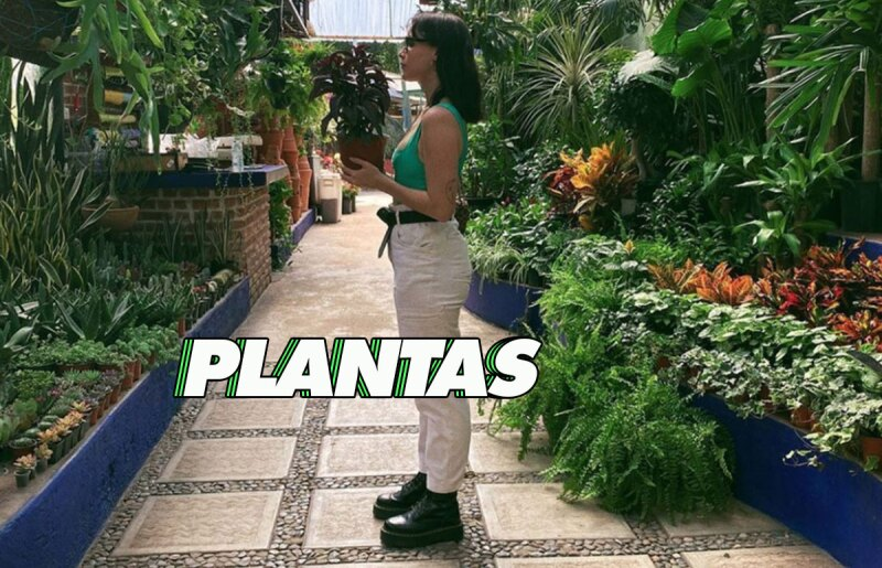 fer-altuzar-plantas