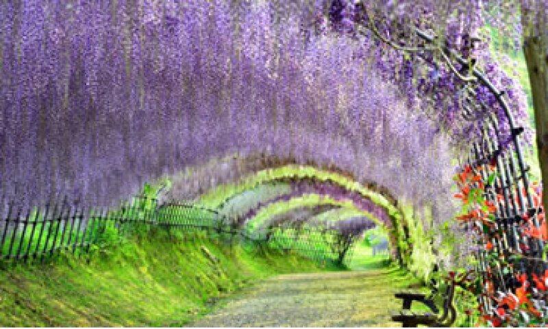 El Jardín Kawachi Fuji en Japón. (Foto: CNN)