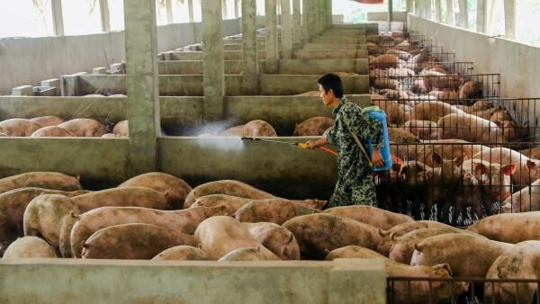 China carne de cerdo escasez
