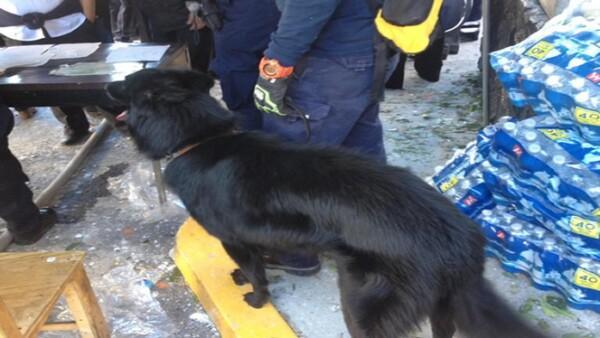 Caninos rastrean la zona derrumbada para ubicar posibles víctimas.