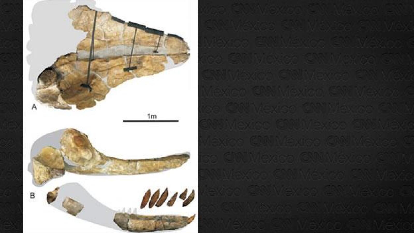 leviatan ballena desierto dientes huesos replicas